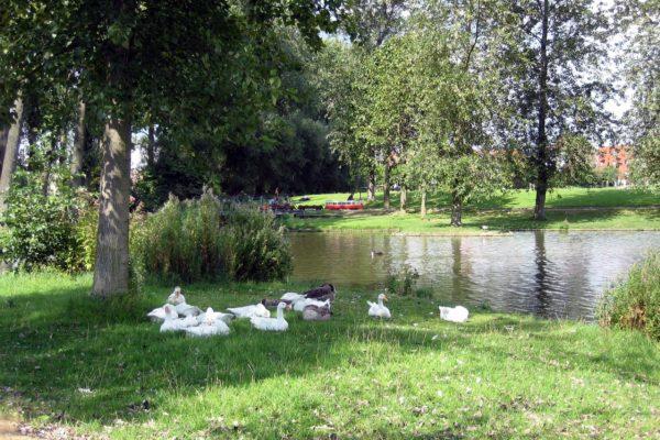 parc bempt (3)